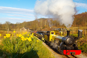 Spring images of daffodils and The Ravenglass and Eskdale Railway (c) Brian Sherwen and Cumbria Tourism